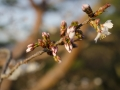 Kochi - spring is comming!