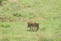 Rhino and Lionpark