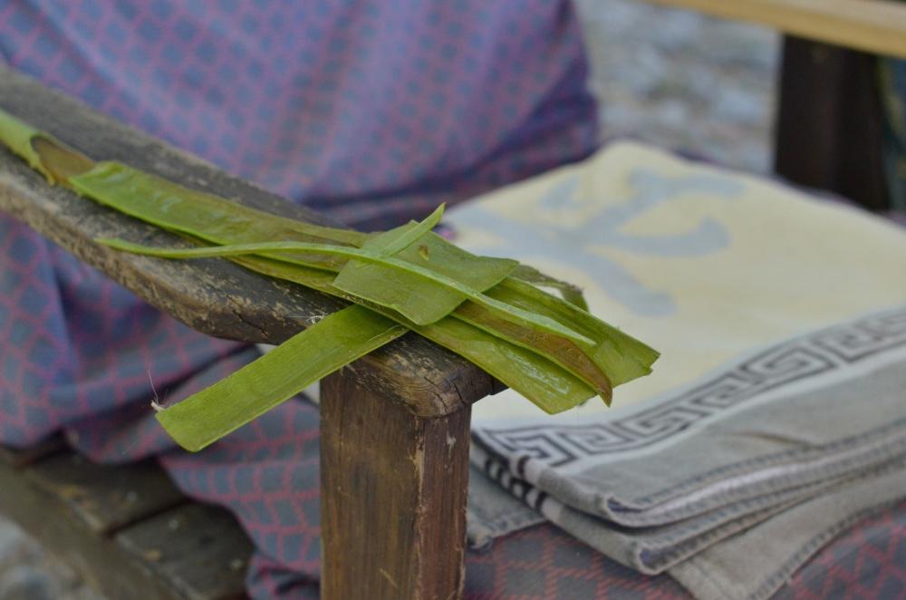 Aloe Vera to heal the skin